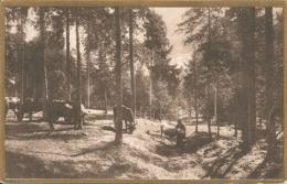 PASCOLO - LOCALITA' NON INDICATA - FORMATO PICCOLO - VIAGGIATA 1916 - (rif. N190) - Breeding