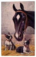 Dogs  And Horse In Barn - Dogs