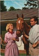 Cartolina Con Cavallo. Non Viaggiata - Cavalli