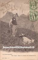 Suisse - Vaud - Anzeindaz S. Gryon - Im Alpenrosenfeld - Sur L'alpe - Dans Un Champ De Rhododendrons Ziegen Goat - VD Vaud