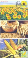2019. Moldova, Agriculture Of Moldova, Field Crops, 3 Maxicards,  Mint/** - Moldavia