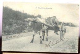 Cpa Attelage Vache  1905  Marcovici - Belgique