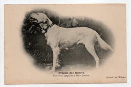 - CPA CHIENS - Drogue Des Genets - Lice Setter Anglaise à Me Siméon - Collection De L'Eleveur - - Honden