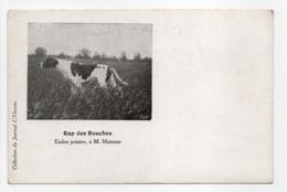 - CPA CHIENS - Rap Des Rouches - Etalon Pointer, à M. Mairesse - Collection Du Journal L'Eleveur - - Jacht