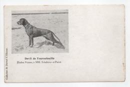 - CPA CHIENS - Devil De Tournefeuille - Etalon Pointer, à MM. Schabaver Et Pariot - Collection Du Journal L'Eleveur - - Jacht