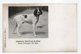 - CPA CHIENS - Champion Ploff II De St-Flour - Braque D'Auvergne à M. Bigot - Collection Du Journal L'Eleveur - - Jacht