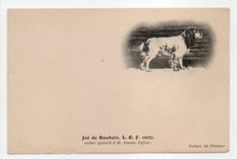 - CPA CHIENS - Jaé De Roubaix L. O. F. 11027 - Cocker Spanich à M. Joanny Dufour - Collection De L'Eleveur - - Honden