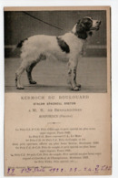- CPA CHIENS - KERMOCH DU BOULOUARD - Etalon Epagneul Breton - M. R. De BERNARDIÈRES, Rosporden - - Honden