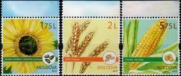 """Moldova 2019 """"Field Crops."""" 3v  Quality:100% - Moldawien (Moldau)"""