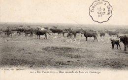 "CPA   EN PROUVENCO---UNO MANADO DE BIOU EN CAMARGO----1910---TAMPON POSTAL "" TARASCON A CETTE "" - Provence-Alpes-Côte D'Azur"