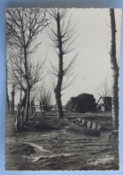C. P. A. : 85 SOULLANS: Photographie D'une Barque Et Des Arbres En Hiver, Timbre En 1964, Signée JACQUES - Soullans
