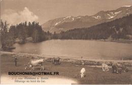 Suisse - Valais - Montana S. Sierre Paturage Au Bord Du Lac Chevre Ziege Goat - VS Wallis