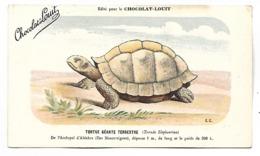 TORTUE GEANTE TERRESTRE  - CHOCOLAT LOUIT - Schildpadden