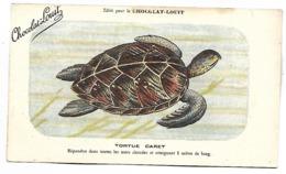 TORTUE CARET  - CHOCOLAT LOUIT - Turtles