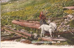 Suisse - Champery - Ziegen An Der Tranke Ziege Goat Chevre - VS Wallis