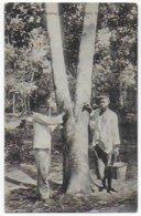 Carte Bon Etat , Malaisie , Arbre à Caoutchouc, Récolte Etat De Sabah , Carte Rare - Malaysia