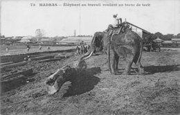 A-19-3916 : MADRAS. ELEPHANT AU TRAVAIL. ROULANT UN TRON DE TECK. - Elephants