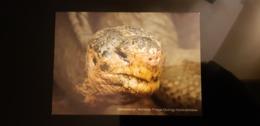 Turtle Face Carte Postale - Schildpadden