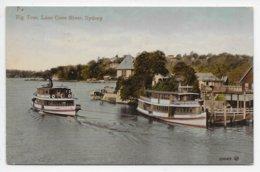 Sydney - Fig Tree, Lane Cove River - Valentine 300183 - Sydney