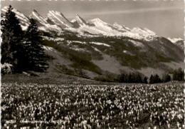 Obertoggenburg, Churfirsten (5228) * 30. 6. 1955 - SG St. Gallen