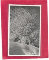 CARTE-PHOTO ORIGINALE GLACEE . EFFETS DE GIVRE HIVER 1937 . PONTARLIER . PHOTO STAINACRE . 2 SCANES - Pontarlier