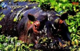 CHINA. FAUNA. HIPOPOTAMO - HIPPOPOTAMUS. JD193-(4-2). (935) - Tarjetas Telefónicas