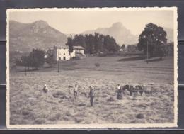 Au Plus Rapide Environs De Vence Fenaison Collection Eclecta - Other Municipalities