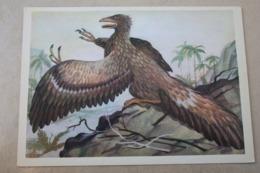 First Bird Archaeopteryx - Bird-like Dinosaur / 1980s Postcard - Oiseaux