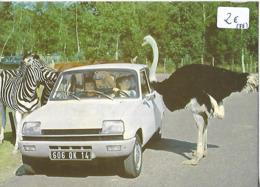 """CARTE """"voiture RENAULT 5"""" 78  Thoirie Zoo Autruche - Voitures De Tourisme"""