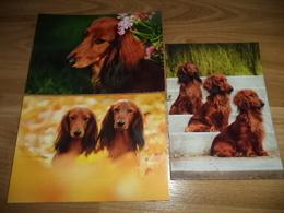 3x Hund Dog Postkarte Dachshund Dackel Teckel - Dogs