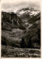 Weisstannen Mit Foostock (21022) * 1950 - SG St. Gallen