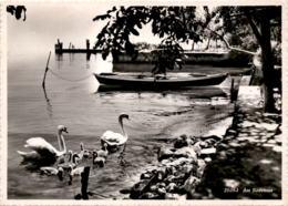 Am Bodensee (20393) * 23. 8. 1946 - SG St. Gallen