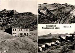 Berggasthaus Maschcachamm-Lücke - 3 Bilder (481) - SG St. Gallen