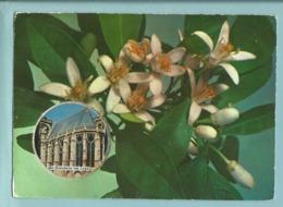 Carte Parfumée Vallazur - Parfum Fleur D' Oranger - Ville De Saint Germain En Laye En Médaillon - Non Ecrite Non Utilisé - St. Germain En Laye (Château)