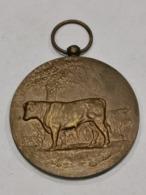 Médaille Luxembourg ,Concours Des Taureaux D'élite 1964 - Tokens & Medals