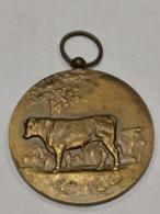 Médaille Luxembourg , 28 Concours Des Taureaux D'élite 1973 - Tokens & Medals