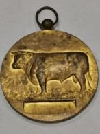 Médaille Luxembourg ,  Concours Des Taureaux D'élite 1965 - Tokens & Medals