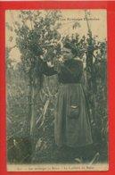 64-212 - PYRENEES ATLANTIQUES - LES PYRENEES ILLUSTREES - Les Vendanges En Béarn - La Cueillette Du Raisin - Francia