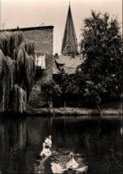 ! DDR Ansichtskarte Hagenow, Am Mühlenteich, Schwäne, Kirche, Mecklenburg - Hagenow