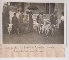 AU JARDIN DES TUILERIES EXPOSITION CANINE PRÉSENTATION DES CHIENS DOGS  18*13CM Maurice-Louis BRANGER PARÍS (1874-1950) - Altri