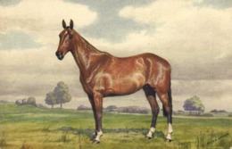 """Illustrateur Signé Cheval ,,Knightsnridge"""" A Hunter Golding (Steeple Chase)  RV - Peintures & Tableaux"""