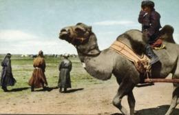 Mongolia China, Native Mongolian Camel Driver (1946) Postcard - Mongolia