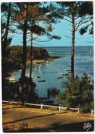 Bassin D'Arcachon - Echappée Sur Le Bassin - (Gironde - 33) - Arcachon