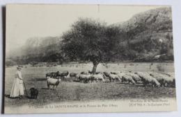 CPA 83 Chaine De La Sainte Baume Plateau Du Plan D'Aups Bergère Avec Ses Moutons Hostellerie Saint Zacharie - Saint-Zacharie
