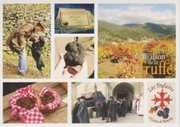 Carte Postale Multiples Marché Truffes Recherche De La Truffe Chien Truffier Tartufo Confrérie Los Trufaïres - Schweine