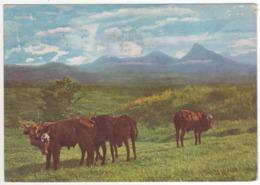 °°° 13966 - RUANDA URUNDI - PUBBLICITA PENTOTHAL - 1959 With Stamps °°° - Ruanda- Urundi