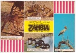 °°° 13967 - GREETINGS FROM ZAMBIA - 1970 °°° - Zambia