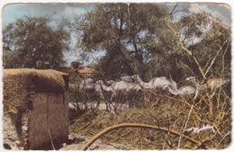 °°° 13968 - SOMALIA - GATEWAY TO HAUD °°° - Somalia