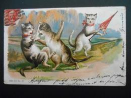 2 Chats Se Bagarrant Devant Chatte Avec Ombrelle  - Gaufrée - Série 750 N° 37 - Katten