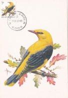 Buzin Carte Maximum Loriot 31.08.1992 - 1985-.. Birds (Buzin)
